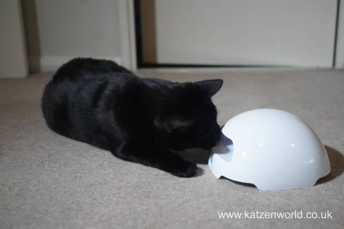 foxden Katzenworld0016