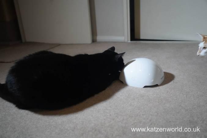 foxden Katzenworld0022