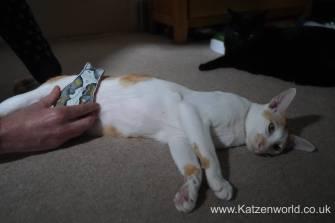 Katzenworld Monmoncats brush0005