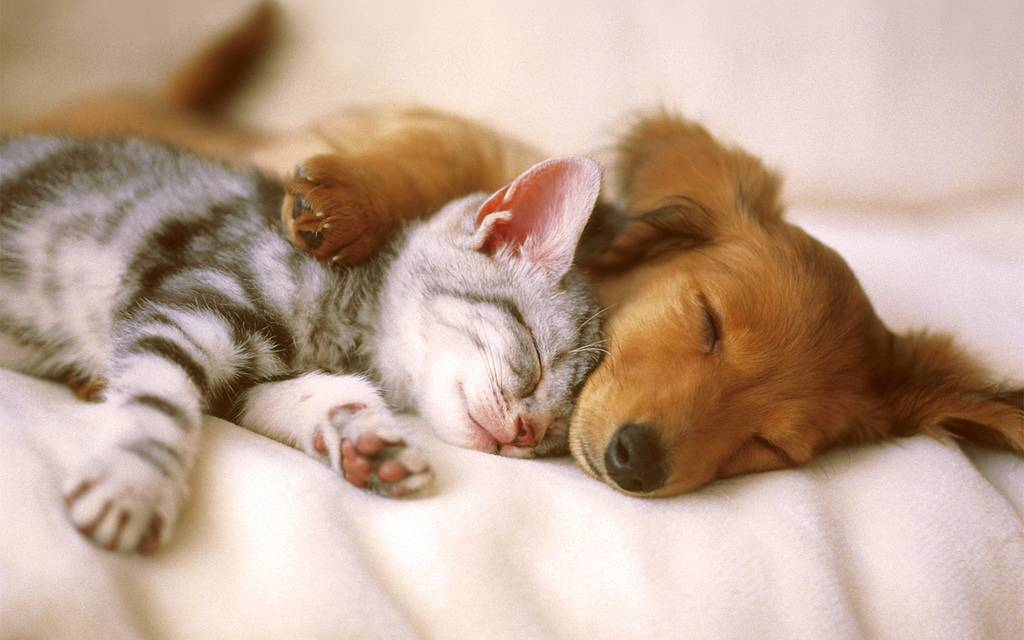 Moving Home With Your Pet - Katzenworld
