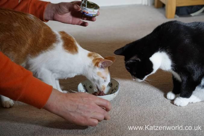 Katzenworld Almo Nature Wild Taste0011