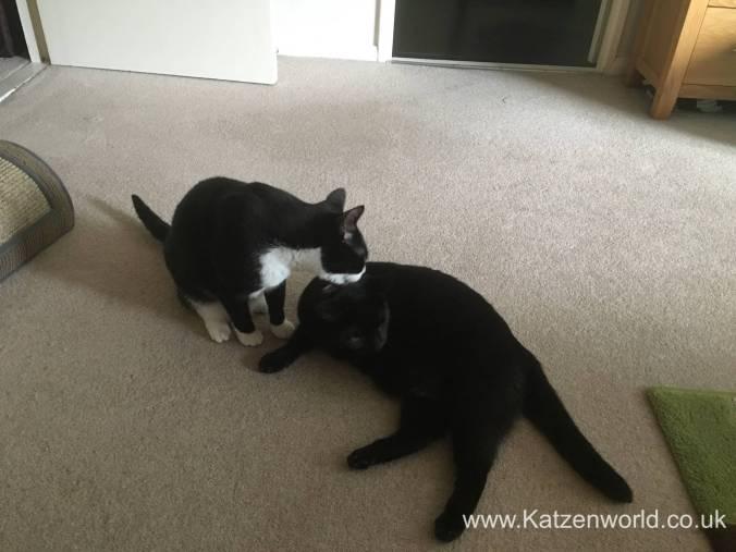 Katzenworld Pet Remedy 0005