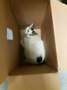 Lovren inside the box and bag