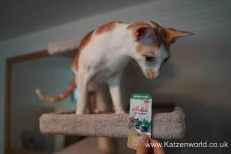 Katzenworld Almo Nature Snack0001