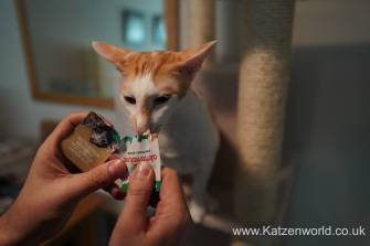 Katzenworld Almo Nature Snack0007