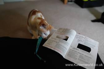 Katzenworld PetPointer0001