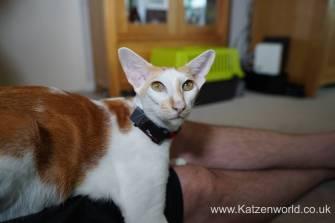 Katzenworld PetPointer0007