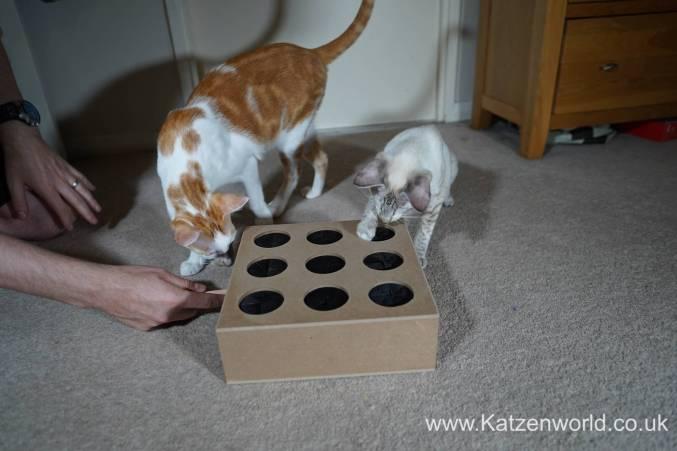Katzenworld Whack-a-Mouse0003