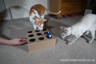Katzenworld Whack-a-Mouse0005