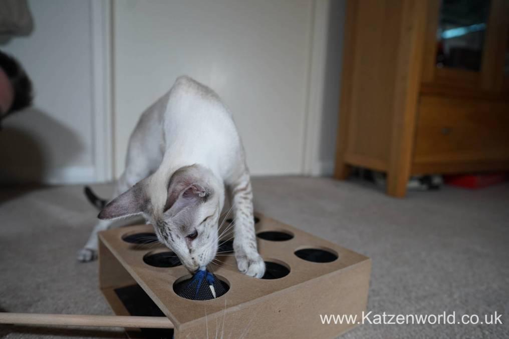 Katzenworld Whack-a-Mouse0017