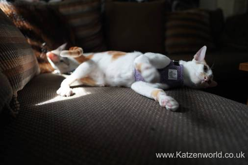 Katzenworld equi-stitch cat harness0007