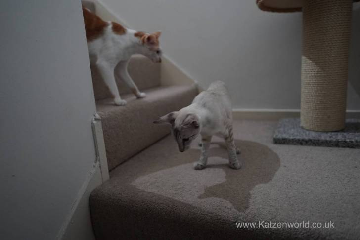"""""""Come on Rennie, lets see what this Hoover can do with all our hair on the stairs"""""""