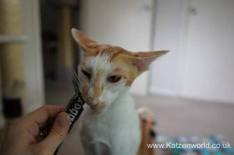 Katzenworld webbox cat treats0010