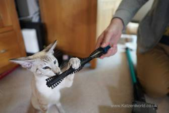 Hmm, this is a strange cat brush but I'll give it a go.