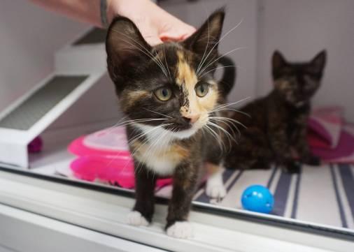 Georgina and Tania kittens