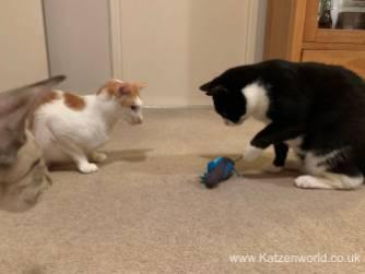 Katzenworld Doc and Phoebe0008