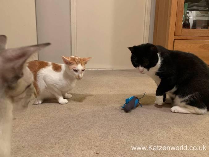 Katzenworld Doc and Phoebe0010