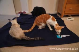 Katzenworld Zylkene0002