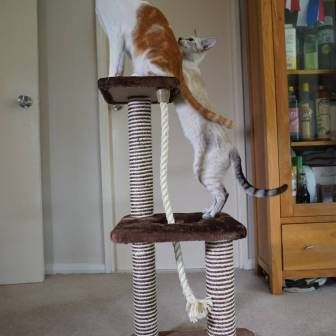 Katzenworld animed direct cat scratcher0013