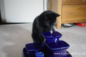 Katzenworld Miaufountain0012