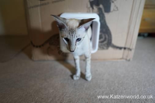 Katzenworld SureFlap0014