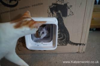 Katzenworld SureFlap0028