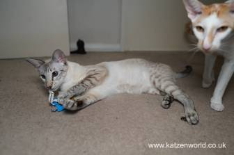 Katzenworld Christmas Stories0026