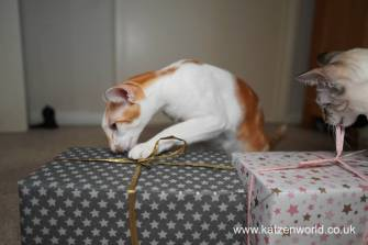 Katzenworld Christmas Stories0032