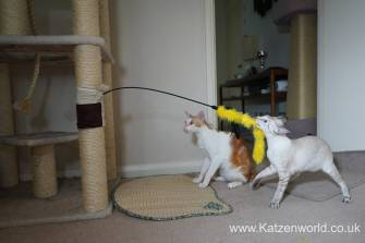 Katzenworld scratch tree cuff0007