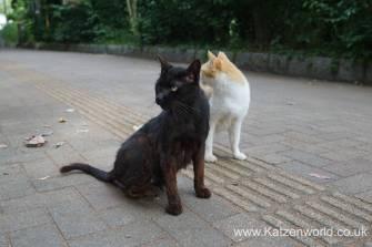 Katzenworld Fukuoka Street Cats0004
