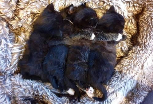 Foster kittens (1)