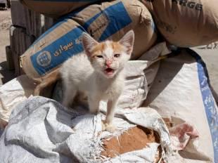 Help me kitten-103