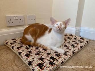 Katzenworld Cat Zen Mat0003