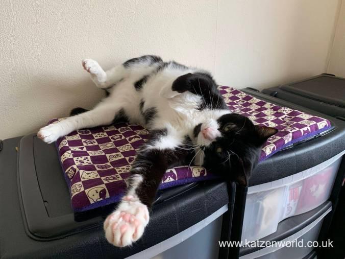 Katzenworld Cat Zen Mat0014