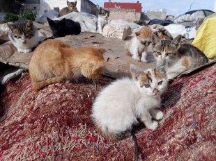 Kittens-33