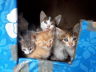 Kittens-35