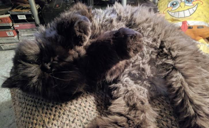 Happy #TRT – Tummy Rub Tuesday (Week 260)