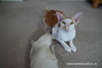 Katzenworld Japanese cat toy0018