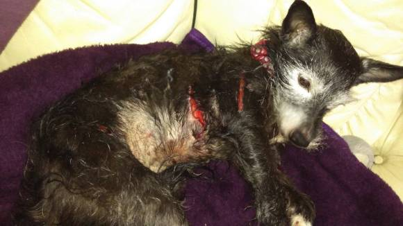 Trinny was left on death's door due to her horrific injuries