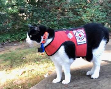 Lost cat finder Henry in vest