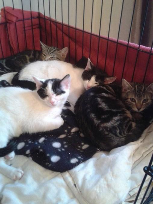 All kittens - a little bit older
