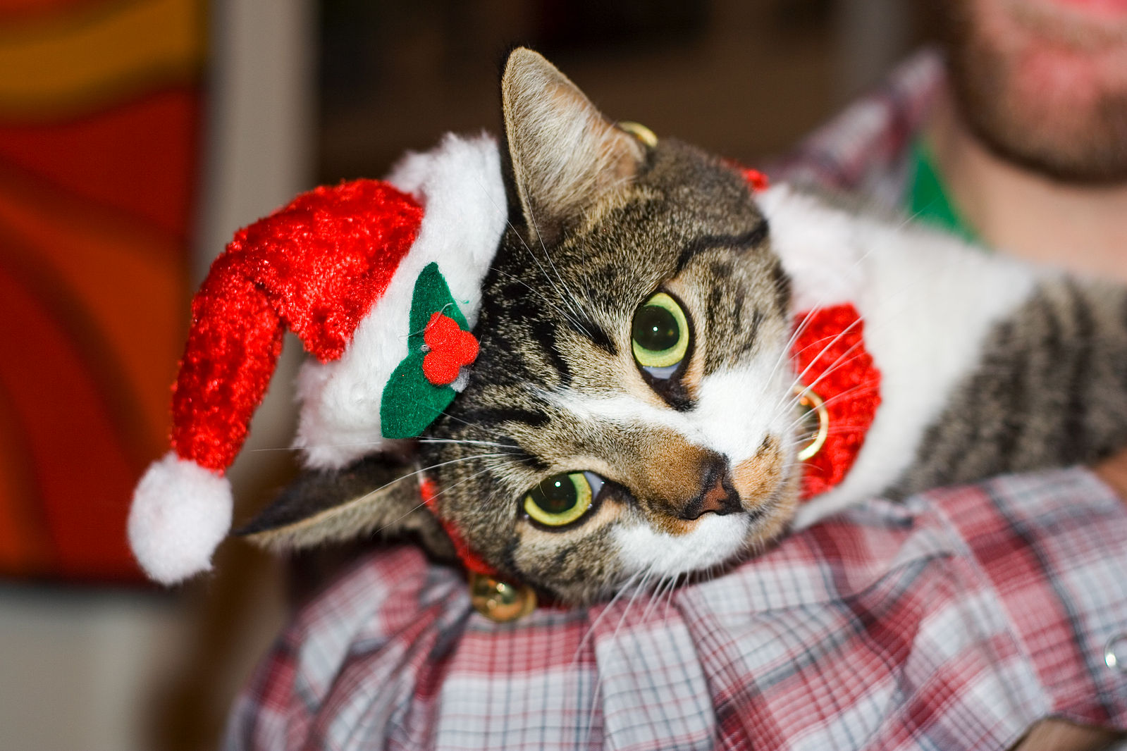 Katzenworld's Last Minute Christmas Gift Ideas!