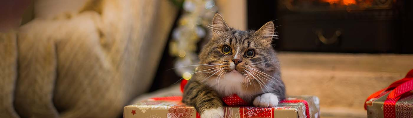 Christmas Pet Survival Guide