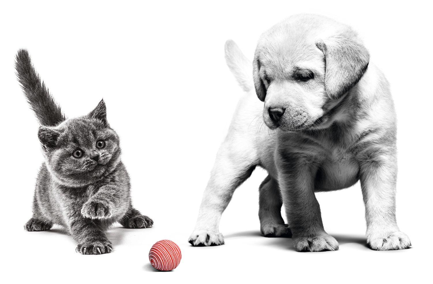 Start of Life – Choosing the Right Nutrition for Your Puppy or Kitten