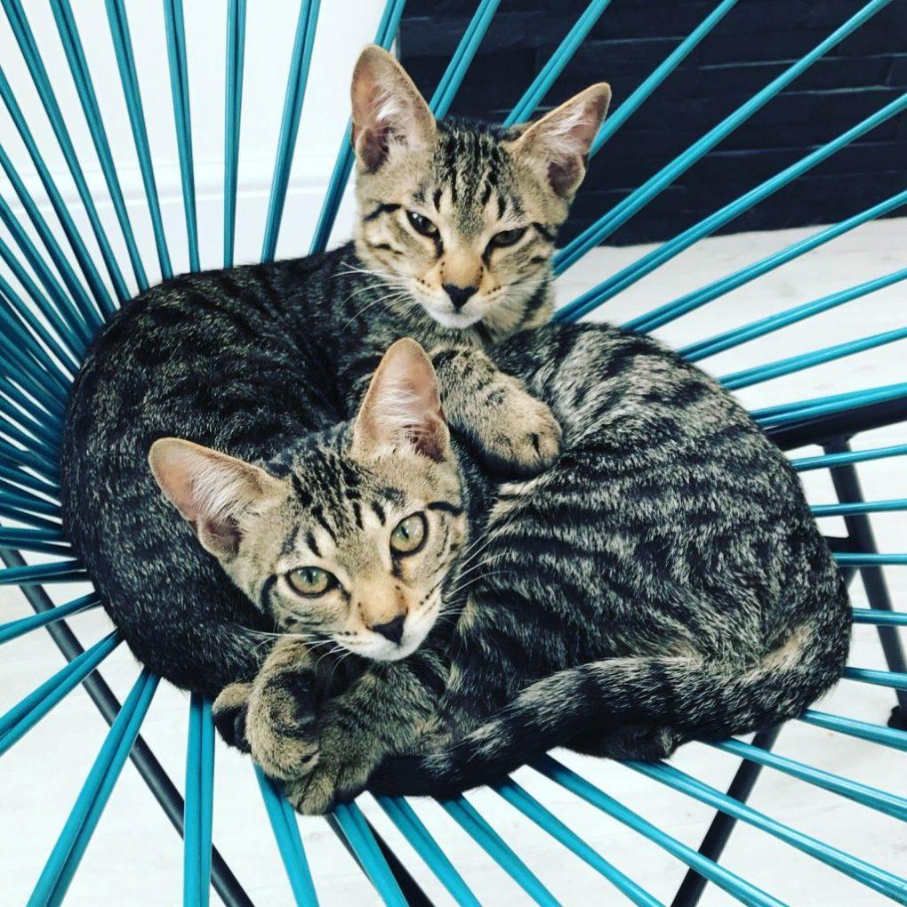 international feline behaviour consultations