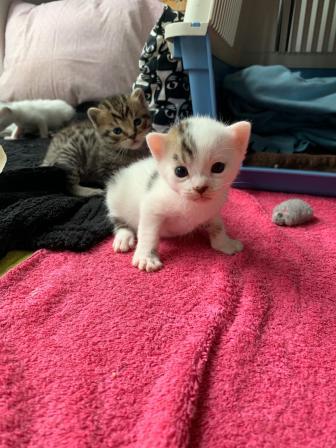Elsa Kittens 2