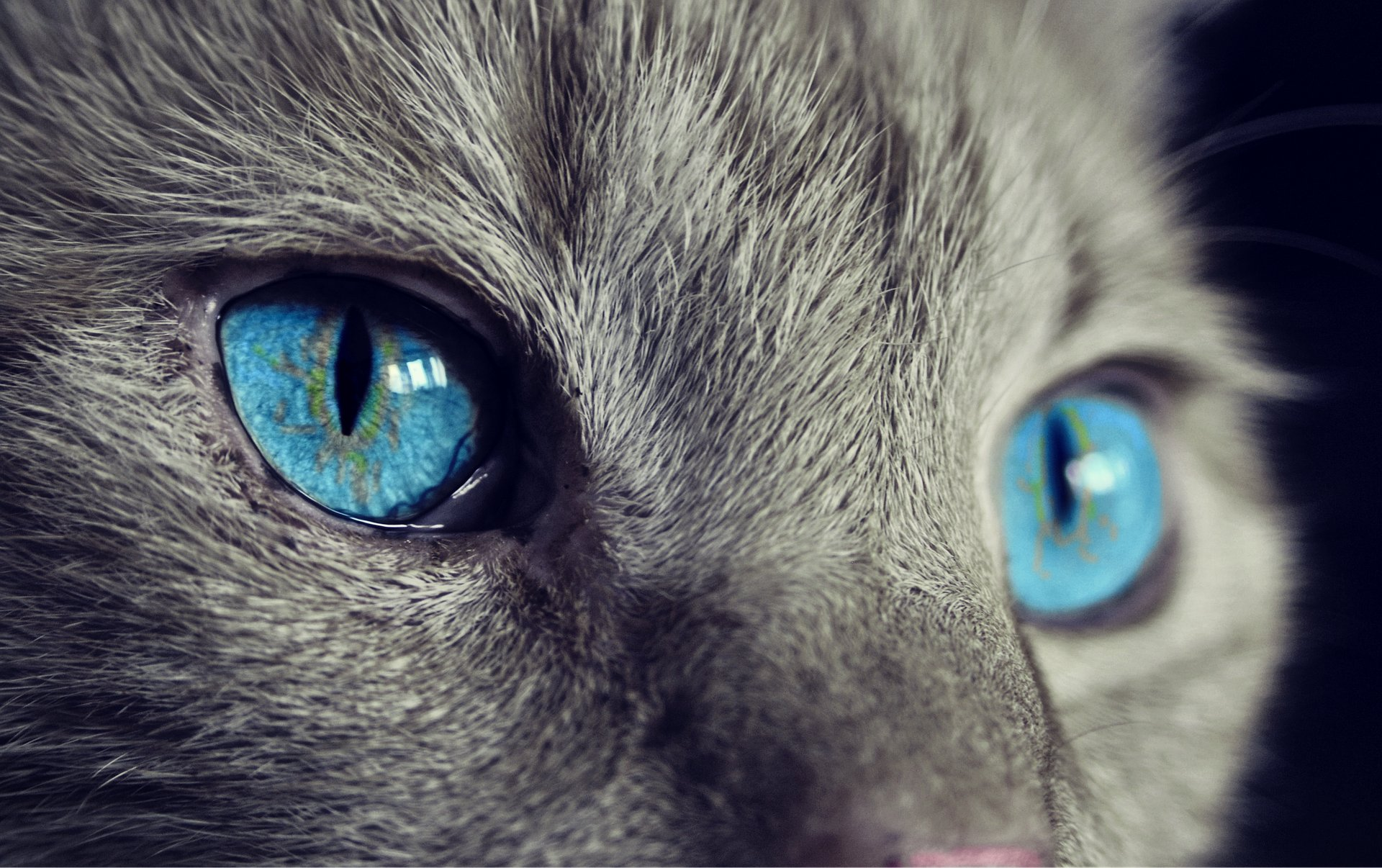 The London Cat Clinic Highlights The 8 Main Eye Problems Affecting Cats