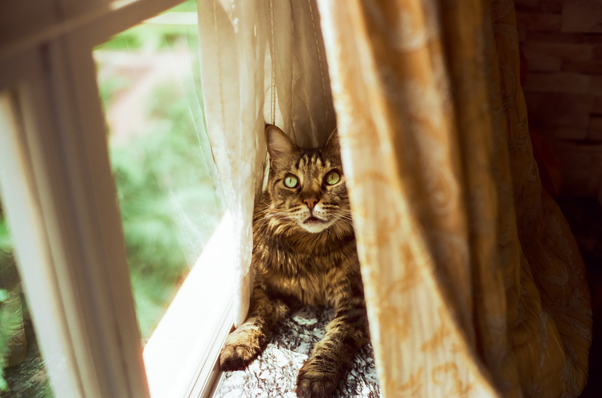 Claw-Shredded Curtains and What You Can Do About It