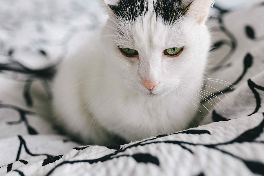 Battersea Offers it's Support to Struggling Pet Owners - Katzenworld