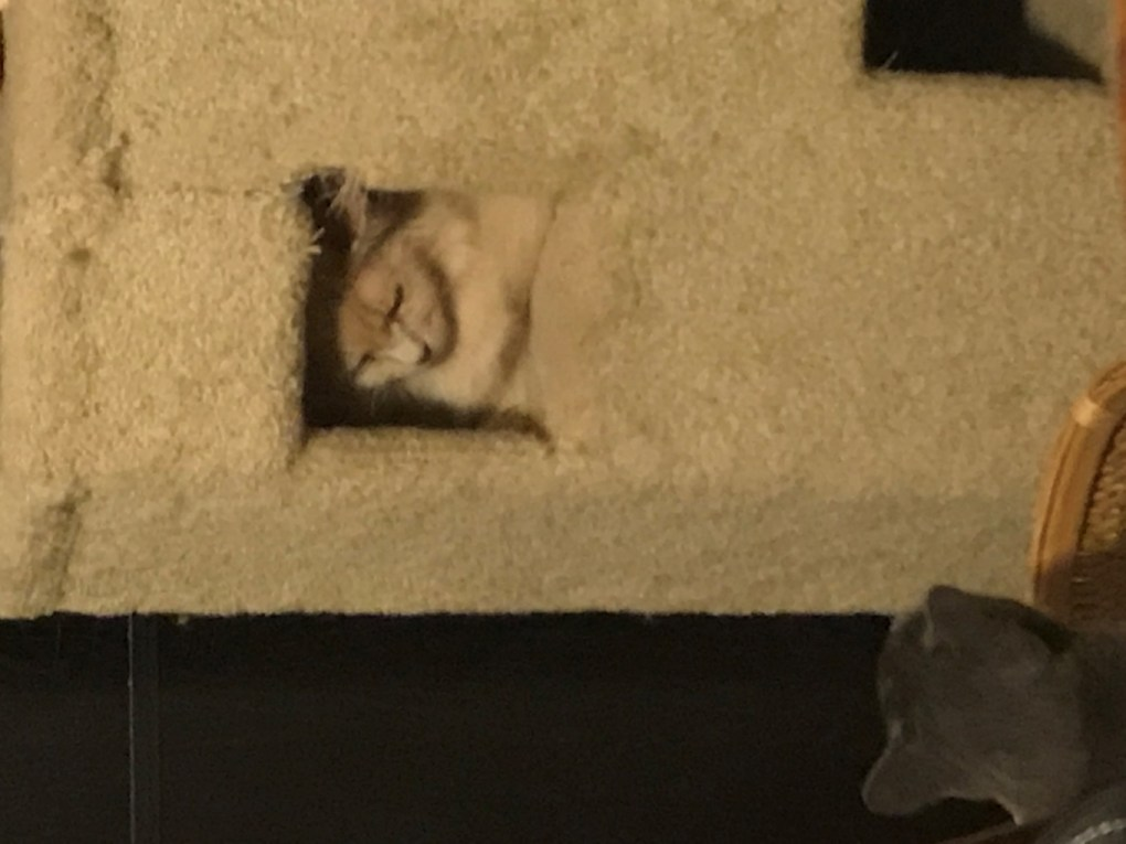 A picture containing building, cat, indoor, sitting  Description automatically generated
